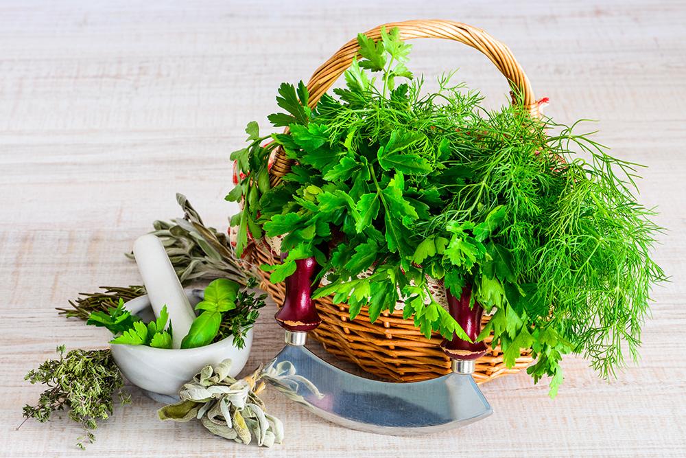 حفظ الأعشاب الخضراء طازجة لمدة طويلة